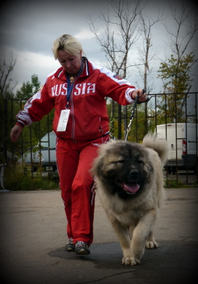 кавказская овчарка Русский Риск Шикарная Львица