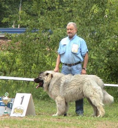 кавказская овчарка Русский Медведь Барин