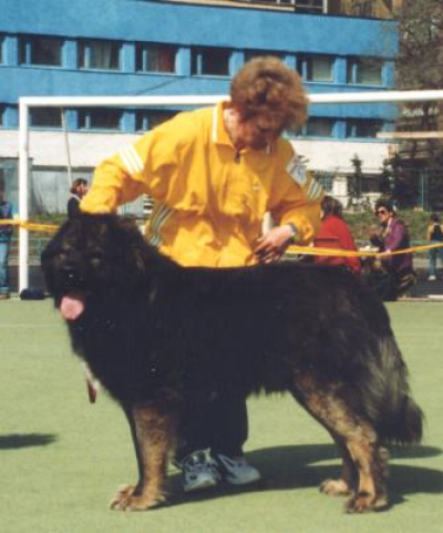 Кавказская овчарка Один Бек, владелец Ягодкина