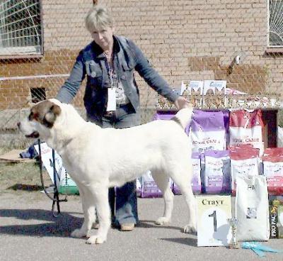 среднеазиатская овчарка - алабай, туркменский волкодав - СУКА, Русский Риск Агзыбирлик
