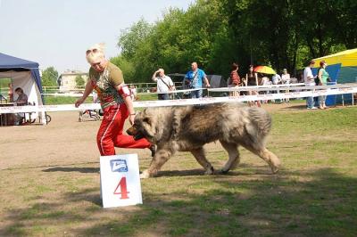 кавказская овчарка Русский Риск Оста