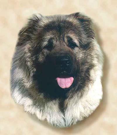 кавказская овчарка Русский Медведь Любава