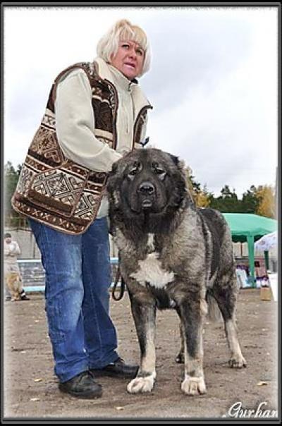 Кавказская овчарка Русский Риск Лапуля 3