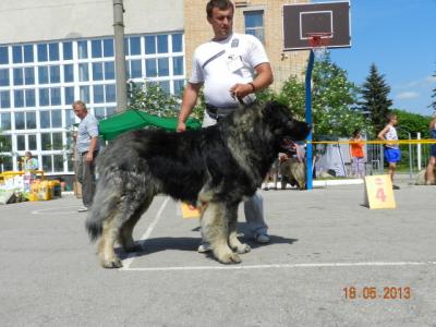 Кавказская овчарка Русский Риск Аватар