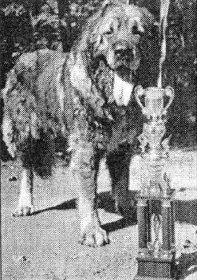 Кавказская овчарка Чингиз Хан Пират