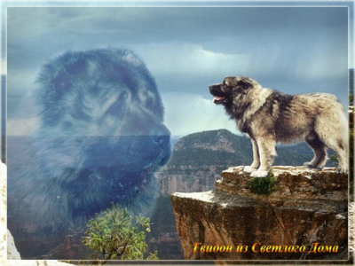 Кавказская овчарка Гвидон из Светлого Дома