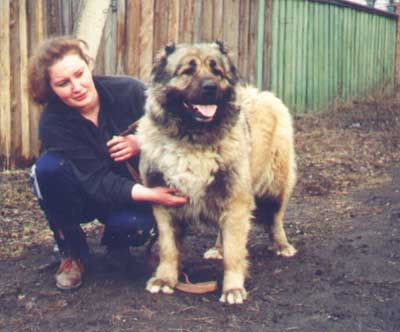 Кавказская овчарка Варна