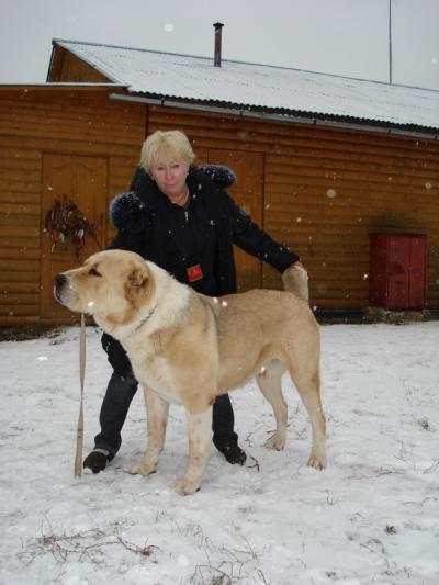 среднеазиатская овчарка, алабай Русский Риск Аклавчы 2,5 года