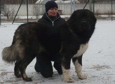 кавказская овчарка, сука, Ненаглядная Принцесса Нури