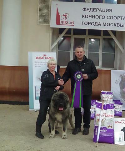 КАВКАЗСКАЯ ОВЧАРКА РУССКИЙ РИСК ОДИН-БЕК 1 год
